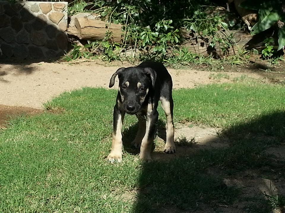 Lunar 9 week Male - Mix (Still timid)